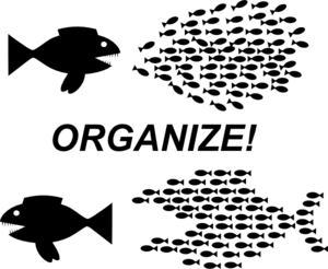 organize-fish-picture-md
